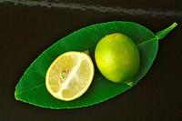 Limequats _ crossbreed of Citrus aurantiifolia and Fortunella japonica _ Round marumi Kumquat and lime fruit imequats _ incrocio Citrus aurantiifolia ...
