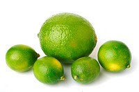 Limequats _ crossbreed of Citrus aurantiifolia and Fortunella japonica _ Round marumi Kumquat and lime fruit imequats _ incrocio Citrus aurantiifolia ...