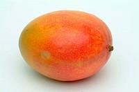 Mango _ Mango Mangifera indica