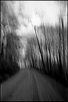Old growth forest way _ blur