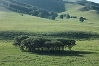 the trees on the grassland