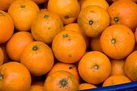 Orange mature, frut, São Paulo, Brazil