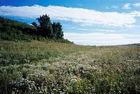 a grassland under the sky