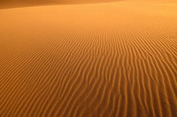 sand on a dune at Khongoryn Els in the Gobi Desert of Mongolia