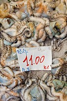 polpo, mercato del pesce, genova, liguria, italia