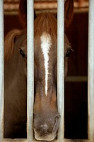 Horse portrait, sad at the other side of the stable jail