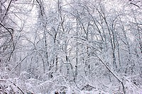 Winter Wonderland _ Illinois