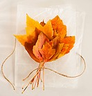 Bunch of autumn leaves on white background