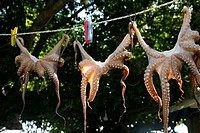 Octopus hanging to dry, Rhodes, Greece