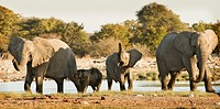 Family of elephants in Etosha National Park, Namibia