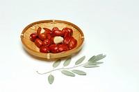 Russian Olive Tree, seed / Elaeagnus angustifolia