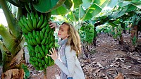 Woman and Banana Tree, Tenerife, Spain