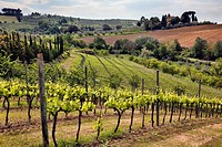 Vineyards and rolling hills in the Tuscany region of Italy