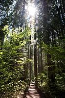 A path through a sunlit forest.