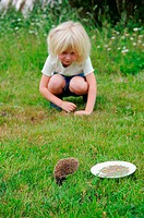 Stock photo of a 6 year old girl watching a baby hedgehog in the garden
