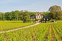 Path leading towards a mansion in a vineyard, Burgundy, France, Europe