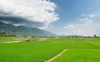 landscape of beautiful green farm
