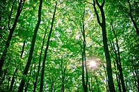 sunlight being detectable in trees in the forest