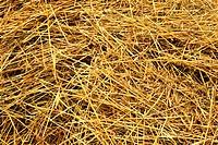 Freshly cut hay