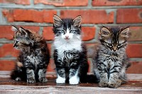 three kittens on bricks background