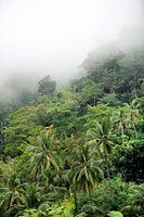 Mountain forest on Atauro Island  East Timor