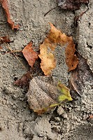 Sand and leaves texture