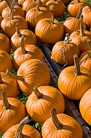 Eden Vermont farm stand pumpkins for sale, New England USA