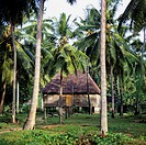 Traditional house on piles, palm tree grove, Praslin island, Seychelles