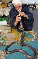 Snake charmer Place Djemaa El Fna Marrakech Morocco