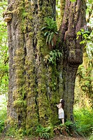A woman stands beside Canada´s largest spruce tree second largest in the world, the San Juan Spruce. This Sitka spruce Picea sitchensis measures 38.3´...