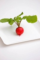 Red Turnip on Plate
