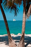 Sailboat between two palm trees on Key West beach