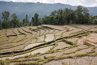 Footpath cutting through a terraced rice field - Pokhara Valley, Nepal - Dhampus Village, Gandaki Zone, Nepal