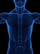 X_ray human body