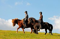 Girls riding Icelandic Horses / side, riding helmet