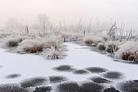 Goldenstedter Moor, Lower Saxony, Germany / Goldenstedter Moor, Niedersachsen, Deutschland