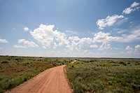 Rural Dirt Road Through Sagebrush Landscape, Texas, USA