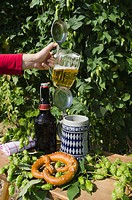 Hand holding a beer mug or stein filled with beer, mug or stein with the Bavarian diamond pattern, beer bottle and pretzel in a hop garden, Mainburg, ...