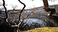 tree, common beech, Creux du Van, Fagus silvatica, mountainscape, rocks, rocky cirque, circus, autumn, fall, Jura, limestone, canton Neuchâtel, crippl...