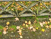 autumn scene with leaves and metal fence