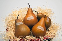 Bosch Pears In A Basket With Organic Labels, Waterloo Quebec Canada