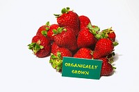 Strawberries With A Sign Labeled Organically Grown, Waterloo Quebec Canada