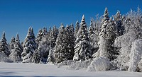 snow covered trees in winter, bondville quebec canada