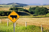 cattle road sign with fields and rolling hills in the background, alberta canada