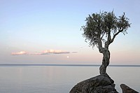 a lone tree on lake superior, grand portage, minnesota, united states of america