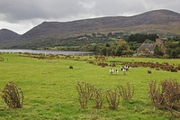countryside beside lough quitane, county kerry republic of ireland