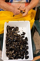 Person cleaning mussels