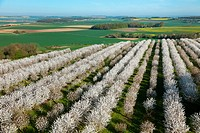 France, Val d´Oise, La Chapelle en Vexin, cherry trees in bloom aerial view