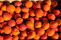France, Drome, Drome provencale, Nyons, Domaine of Rocheville with its vineyards and its famous apricot and olive