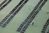 France, Manche, Saint Vaast la Hougue, oyster park aerial view